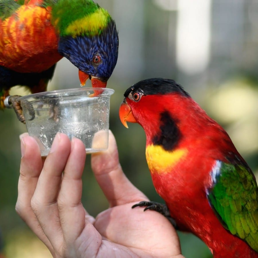 CBD Oil for Birds